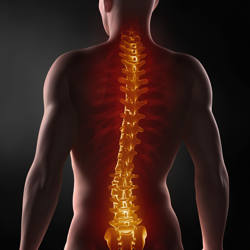 Yin & Somatics For Back Pain Relief With Rosemary Booker - Price £25